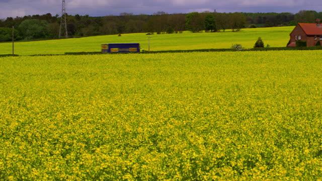 vídeos de stock e filmes b-roll de rape seed field 2015 - scarborough reino unido