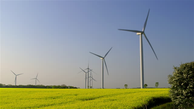 rape seed & turbines - energia rinnovabile video stock e b–roll