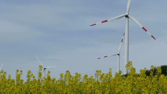 rapefield and windturbins, saargau near kirf, rhineland-palatinate, germany, europe - crucifers 個影片檔及 b 捲影像