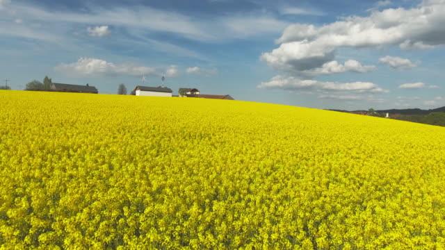 AERIAL Rapeseed Field In Spring (4K/UHD)