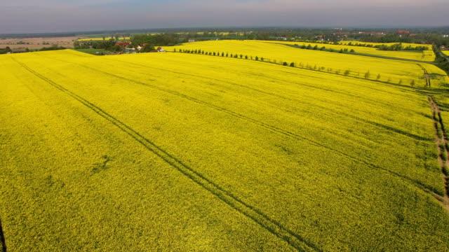 Rapeseed Fields Blossom In Brandenburg