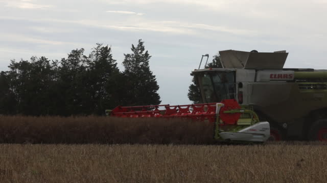 rapeseed harvest in ramsgate kent uk on monday july 13 2020 - ramsgate stock videos & royalty-free footage