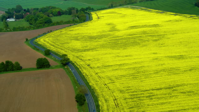rapeseed oil field, folkton, north yorkshire, england - rapeseed oil stock videos and b-roll footage