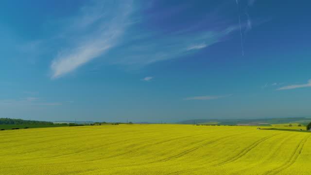 rapeseed oil field, north yorkshire, england - 顕花植物点の映像素材/bロール