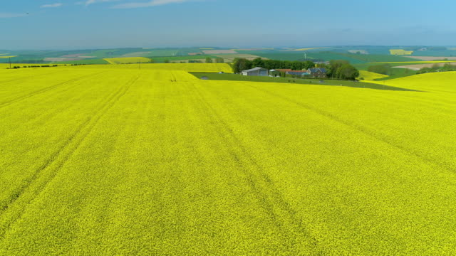 rapeseed oil field, north yorkshire, england - rapeseed oil stock videos and b-roll footage