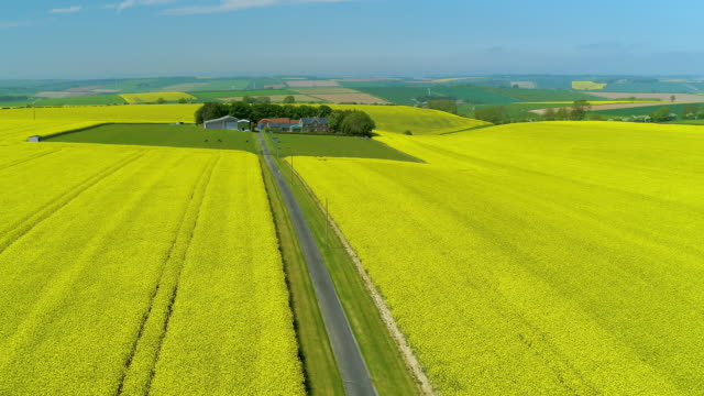 rapeseed oil field, north yorkshire, england - telephone pole stock videos & royalty-free footage
