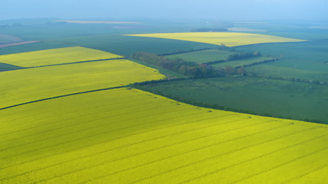 rapeseed oil fields, north yorkshire, england - rapeseed oil stock videos and b-roll footage