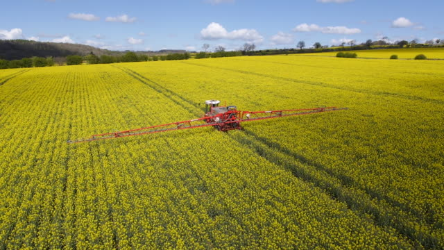 rapeseed spraying - insecticide stock videos & royalty-free footage