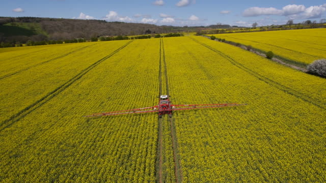 Rapeseed Spraying