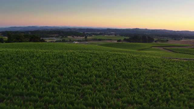 Rapid Drone Shot Over Beautiful California Wine Country at Sunset