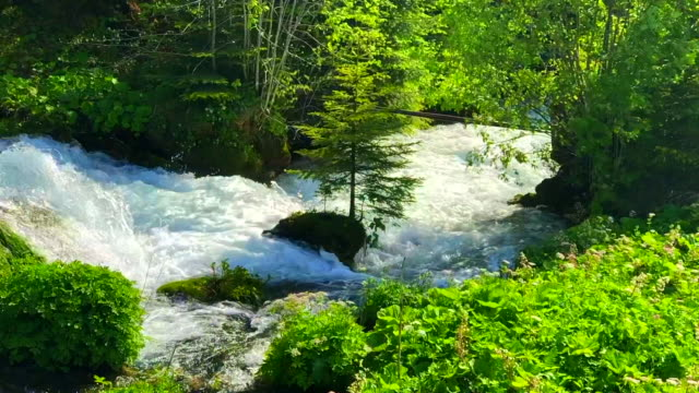 rapids of the jogne river past jaun falls - flowing water stock videos & royalty-free footage