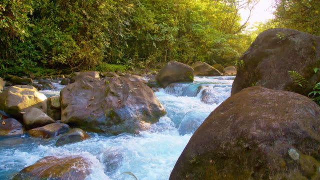 slo mo rapids on the river rio celeste - costa rica video stock e b–roll