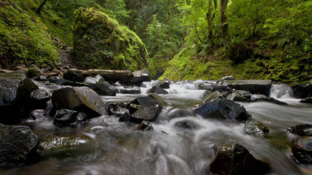 time lapse medium tracking shot rapids over rocks of bridal veil falls in green forest in columbia river gorge, oregon - columbia river gorge stock videos & royalty-free footage