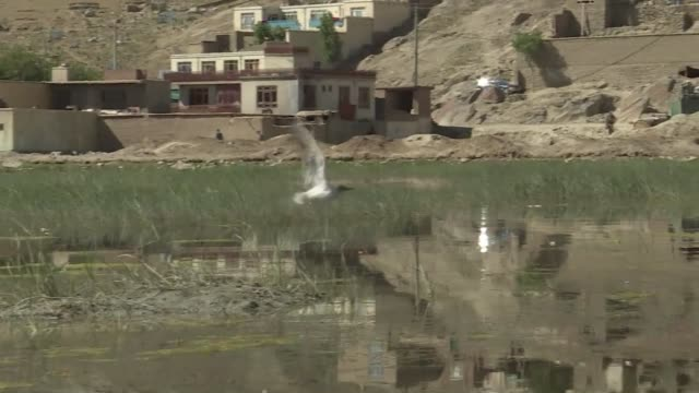 rare afghan marsh that was once a royal hunting ground is set to come under the official protection of the un environment agency with the aim of... - bird hunting stock videos & royalty-free footage