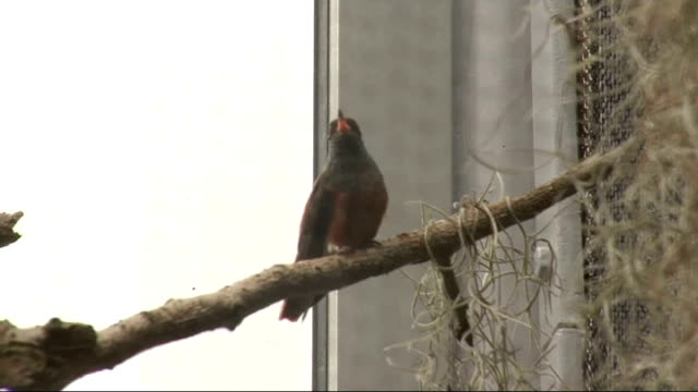vidéos et rushes de rare and exotic birds enclosure unveiled at london zoo england london london zoo int various of hummingbird on branch in new london zoo exotic birds... - se lisser les plumes