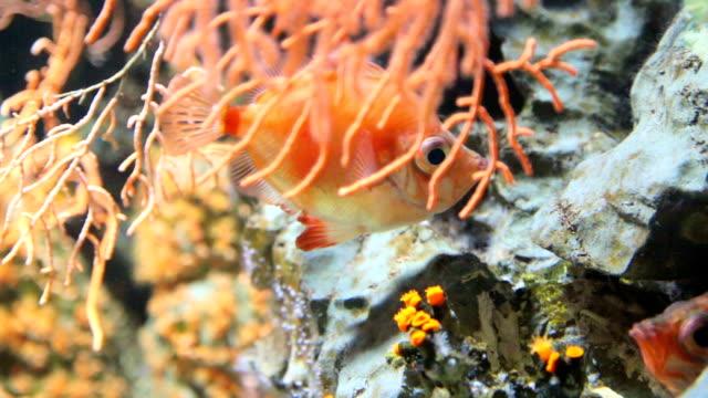 Seltene Fische schwimmen im aquarium
