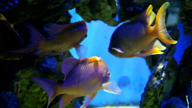 Rare Aquarium Fish Videos And B Roll Footage