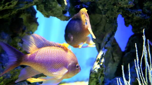 Seltene Fische schwimmen