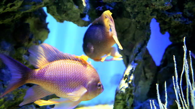 Zeldzame vissen zwemmen