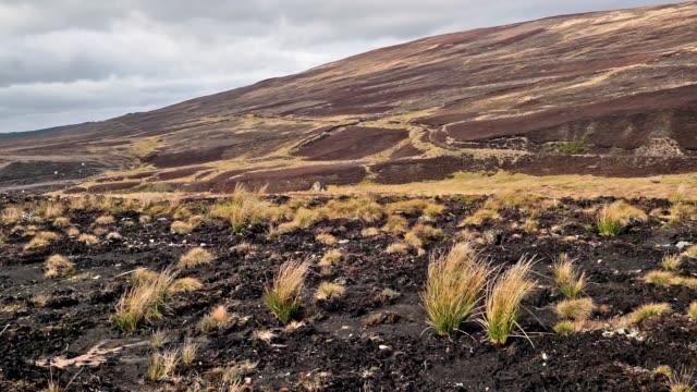 泥炭地で希少な自然の生息地ブランケットの泥炭沼 - 荒野点の映像素材/bロール