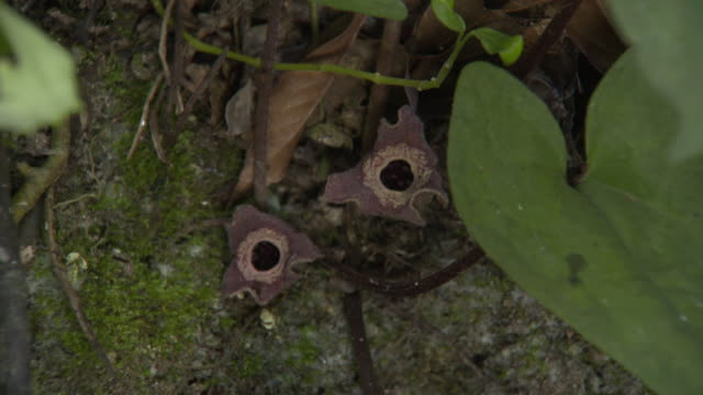 rare plants in tokunoshima island - endemic stock videos and b-roll footage