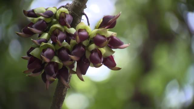 rare plants in tokunoshima island - okinawa prefecture stock videos & royalty-free footage