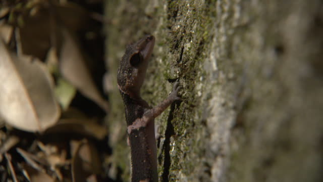 rare species in tokunoshima island - stone wall stock videos and b-roll footage