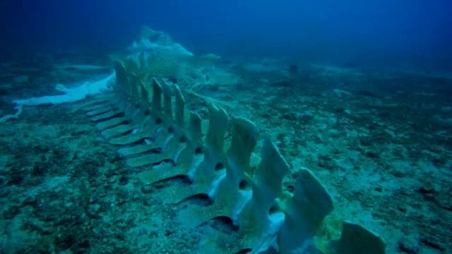 Zeldzame walvis skelet onderwater