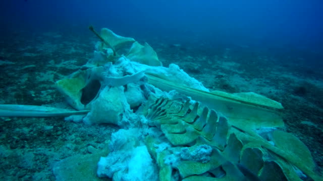 rare whale skeleton underwater - seabed stock videos & royalty-free footage
