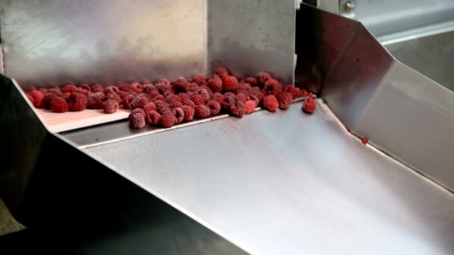 raspberries in food factory - cibi surgelati video stock e b–roll
