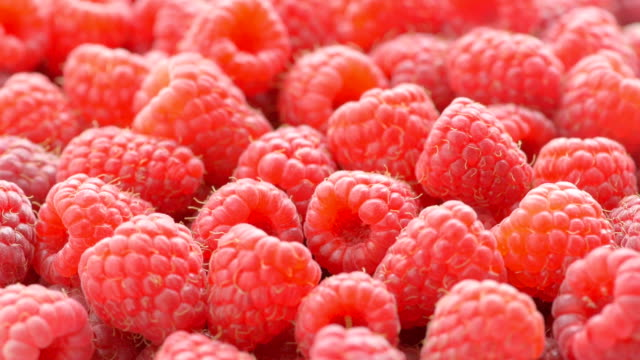 raspberry background - raspberry stock videos and b-roll footage
