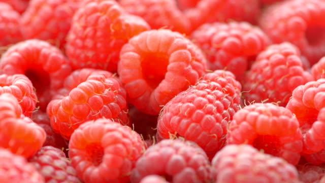 raspberry background - raspberry stock videos & royalty-free footage