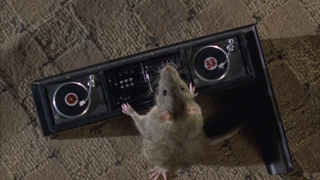 stockvideo's en b-roll-footage met cu ms rat playing records on sound system - rat