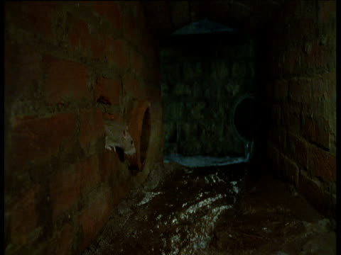 rat sticks its head out of hole in brickwork, yorkshire - sewage stock videos and b-roll footage