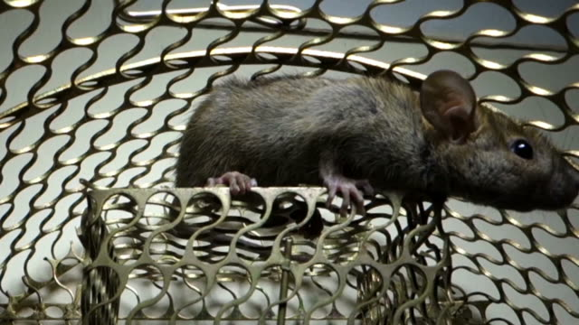 rat trap - domestic animals stock videos & royalty-free footage