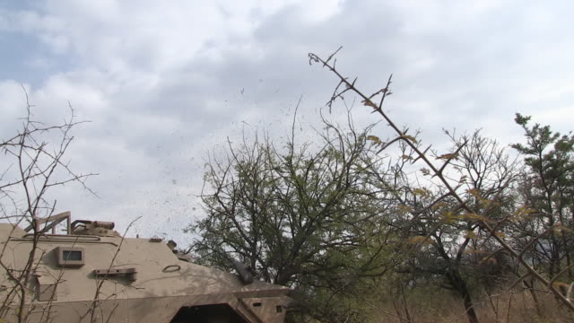 ratel military vehicle drives through trees knocking one over. - durevolezza video stock e b–roll