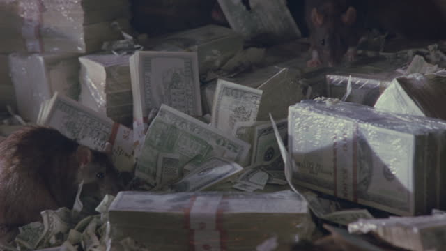 rats crawl around bundles of money. - american one hundred dollar bill stock videos & royalty-free footage