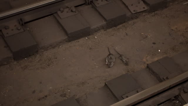 rats in railroad station - roditore video stock e b–roll