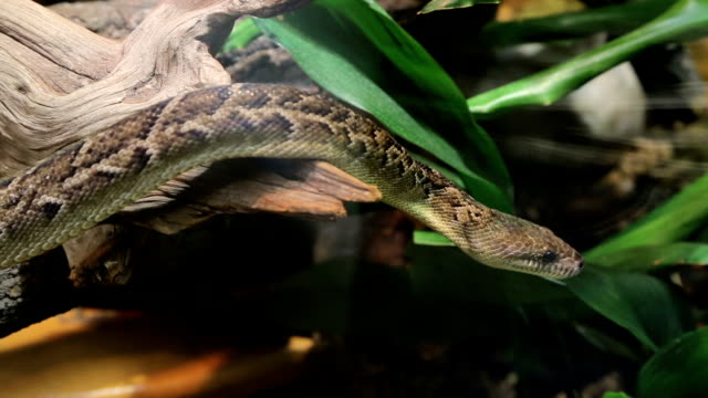 rattlesnake - cage stock videos & royalty-free footage
