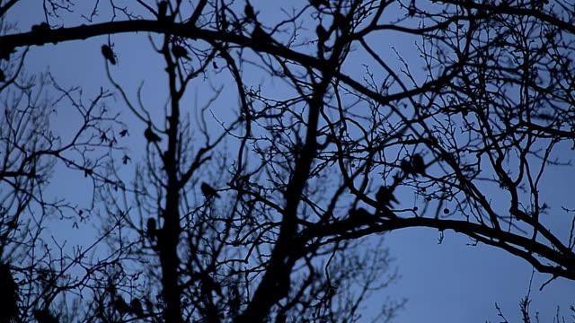 レイヴンズの木で深夜までご利用いただけます。ストック動画 - 脅し点の映像素材/bロール