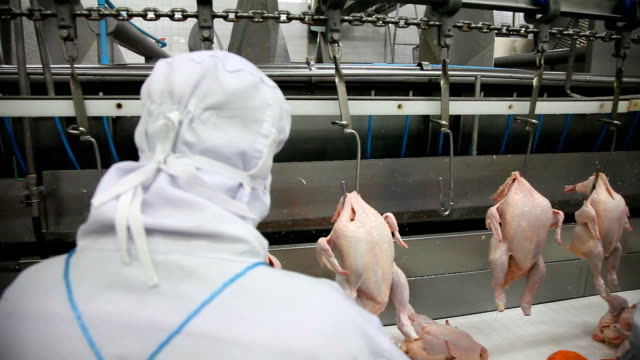 raw chicken meat processing - poultry stock videos & royalty-free footage