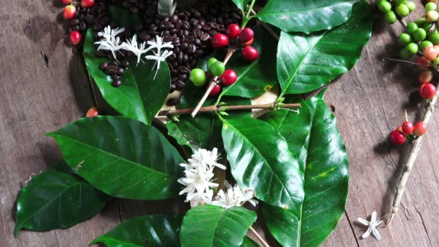 raw coffee beans and ready to drink coffee - coffee drink stock videos & royalty-free footage