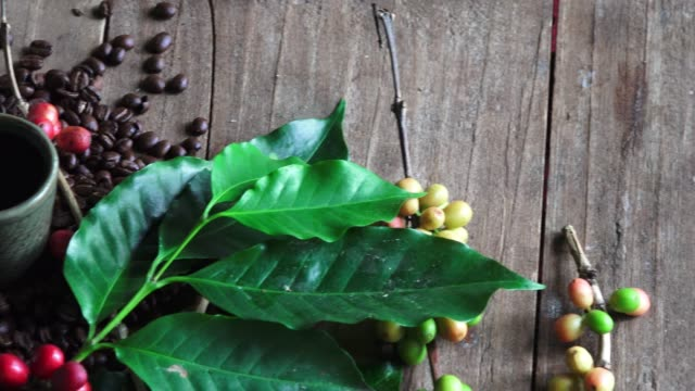 pan:raw coffee beans and ready to drink coffee - coffee drink stock videos & royalty-free footage