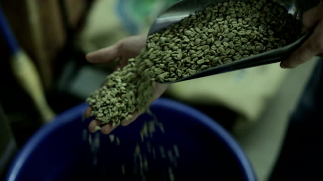 raw coffee beans - quality control stock videos & royalty-free footage