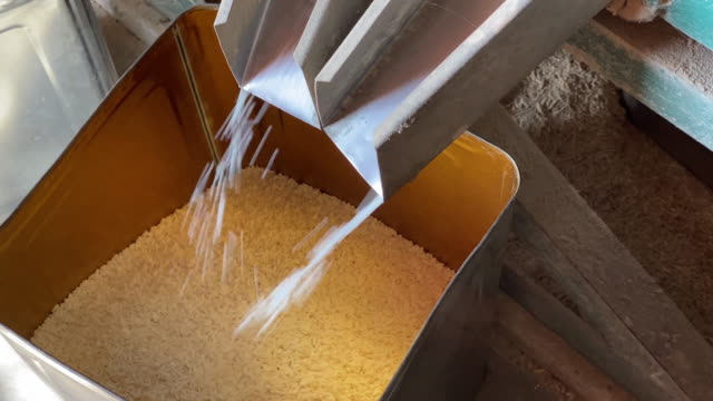 raw rice produce - rice cereal plant stock videos & royalty-free footage