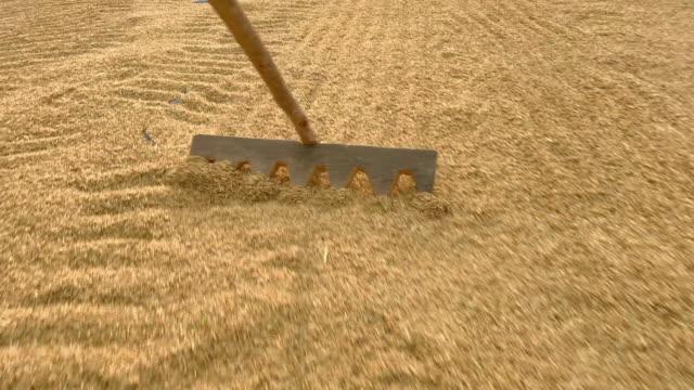 raw rice raking - drying stock videos & royalty-free footage