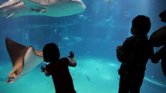 ray and whale shark in the aquarium - 水族館点の映像素材/bロール