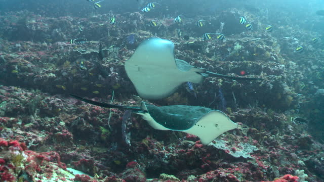 rays circle over reef, bali. - 40 seconds or greater stock videos & royalty-free footage