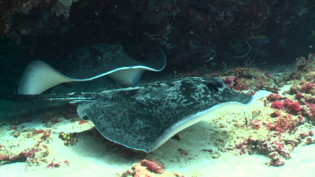 rays emerge from rock crevice, bali. - crevice stock videos & royalty-free footage