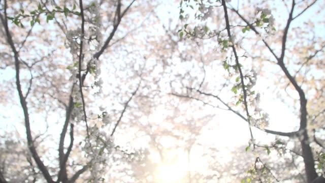 花を通してフィルタ リング光の光線 - 政治行動委員会点の映像素材/bロール